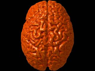 Acupuncturists Have Different Brains (we have more grey matter!!)
